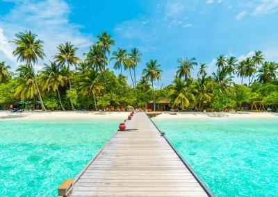 Stockforlife/Shutterstock.com // Malediven - Atolle und tropische Inseln mit weißen Sandstränden und Kokuspalmen
