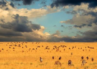 Larimer Images/Shutterstock.com - End of the Great Migration - Serengeti National Park, Kenya