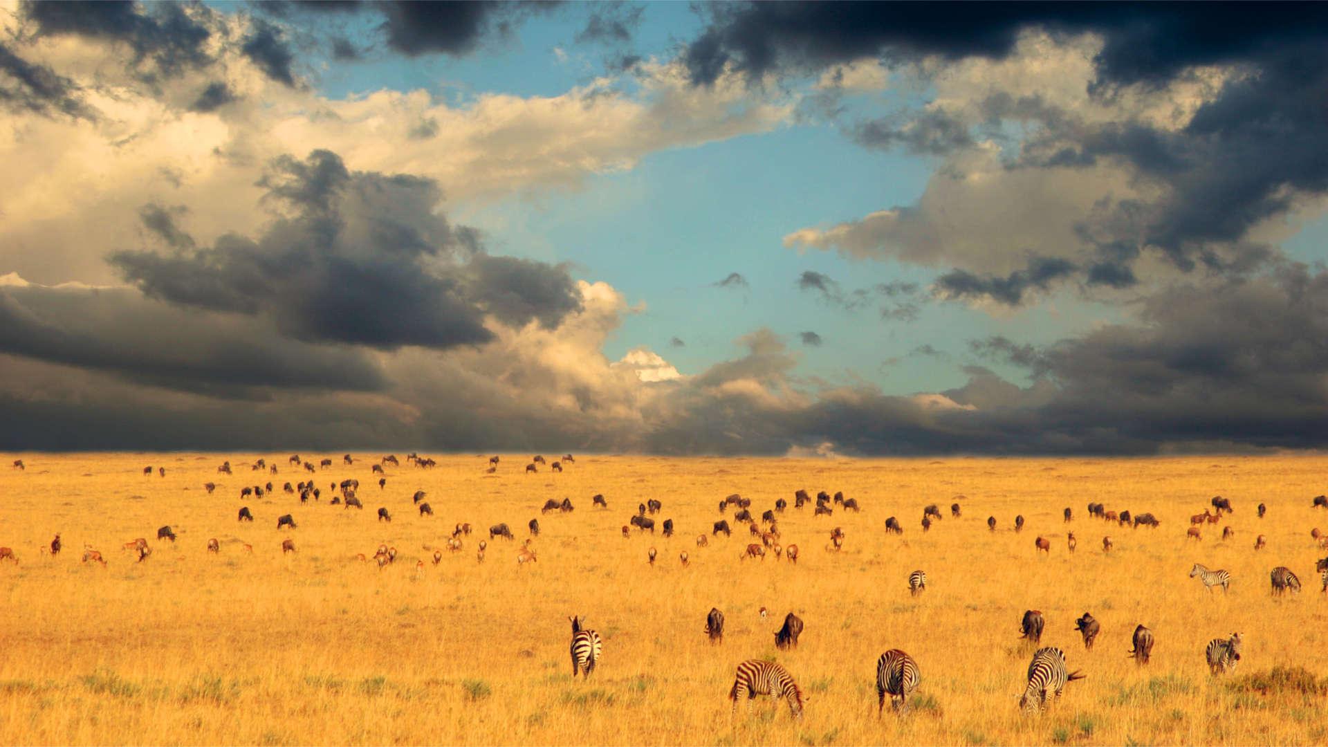 Afrika | Kenya | ©Larimer Images/Shutterstock.com