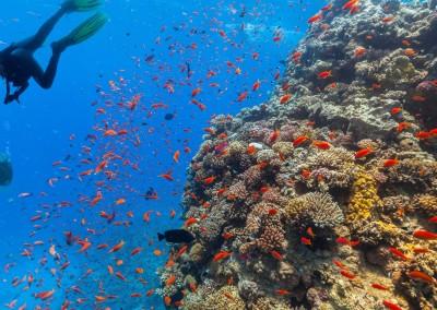 Jag_cz/shutterstock.com // Tauchen am Korallenriff