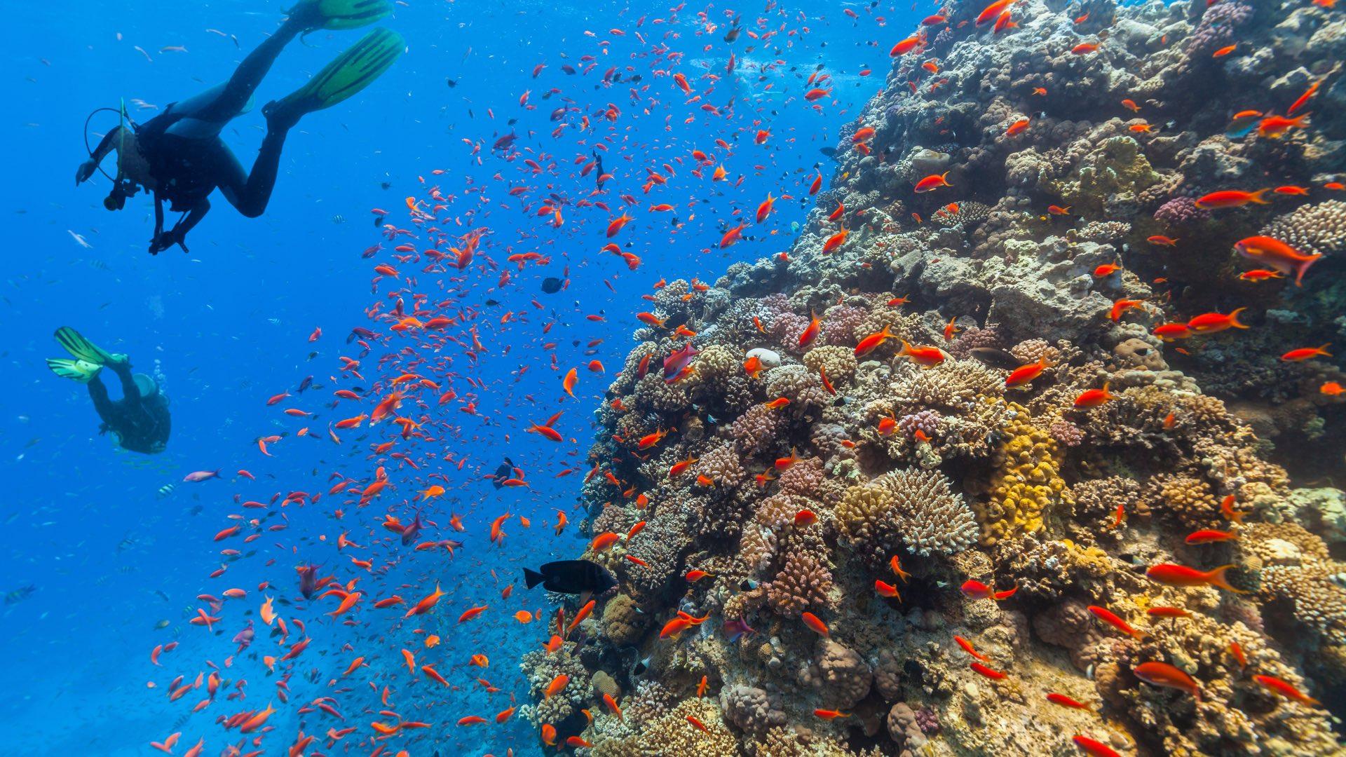 Tauchen am Korallenriff | ©Jag_cz/Shutterstock.com