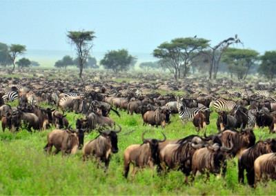 EastVillage Images/Shutterstock.com // The Great Migration at Serengeti National Park, Tanzania