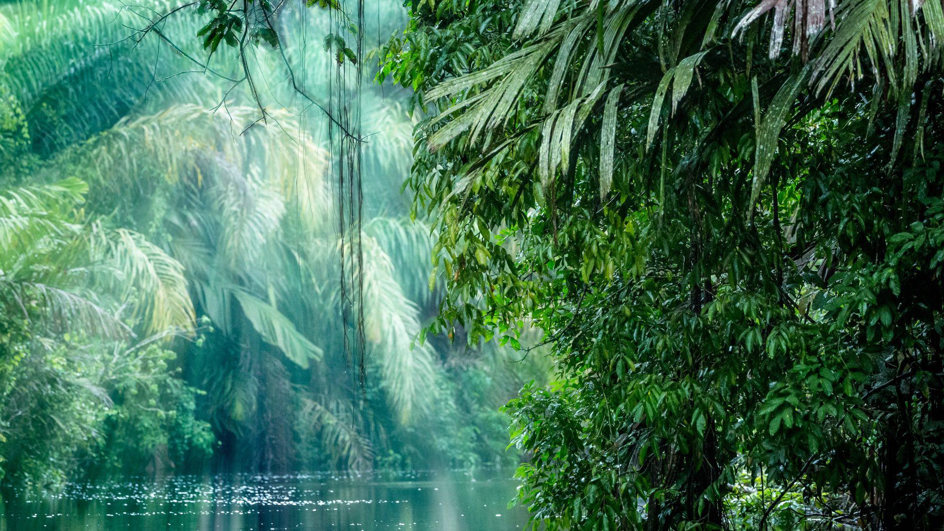 Costa Rica | Regenwald | ©ronnybas/shutterstock.com