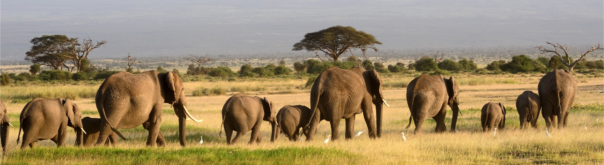 Afrika | Kenia | ©Attila Jandi/Shutterstock.com