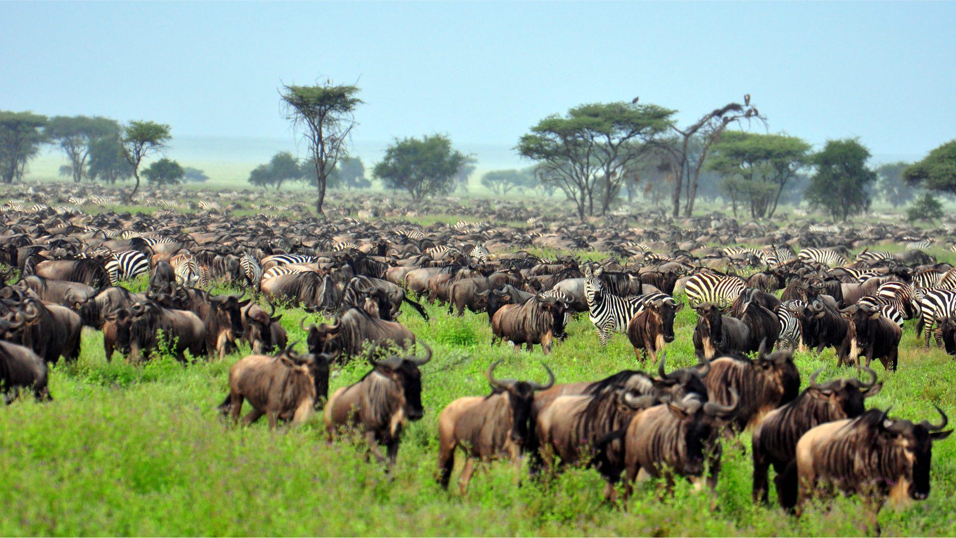Afrika | Tansania | ©EastVillage Images/Shutterstock.com
